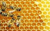 باشگاه خبرنگاران -تولید ۵۰ کیلوگرم عسل در زیر سقف یک خانه + فیلم