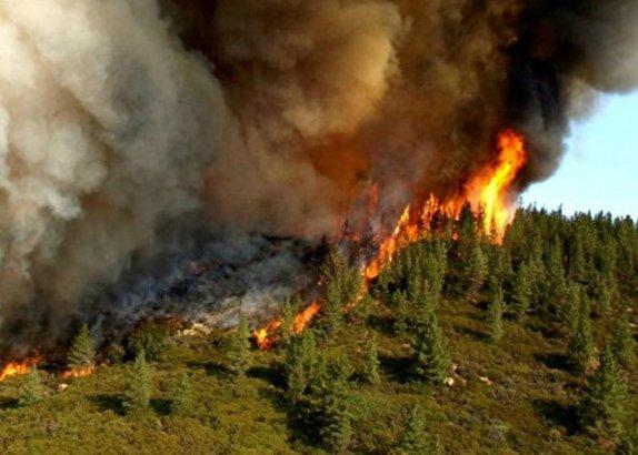 باشگاه خبرنگاران -علت گسترش آتش در جنگلهای ارسباران چه بود؟ / پایان عملیات لکه گیری