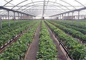 ۶۰ هزار هکتار شهرک گلخانهای در کشور واگذار میشود