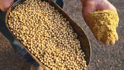 ۸۶ هزار تُن کنجاله سویا در کردستان خریداری شد