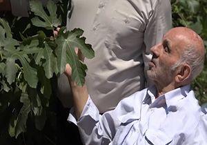 پدر انجیر ایران کیست؟ + فیلم