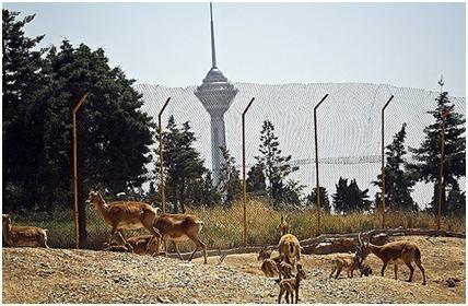 سازمان محیط زیست حیوانات پارک پردیسان را به صورت امانی به متقاضیان میدهد