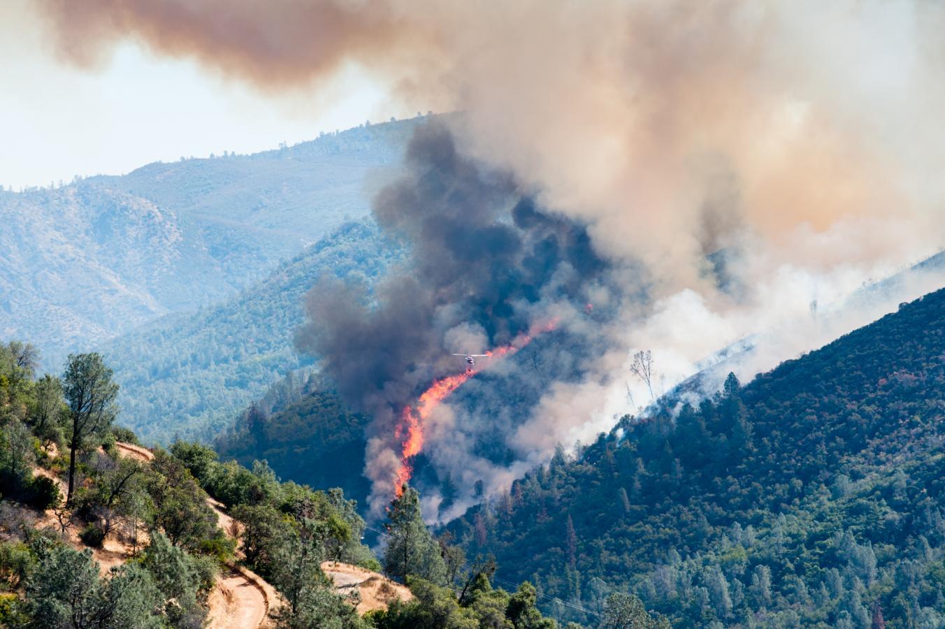 نابودی ۱/۷ میلیون هکتار از اراضی جنگلی بولیوی بر اثر آتشسوزی