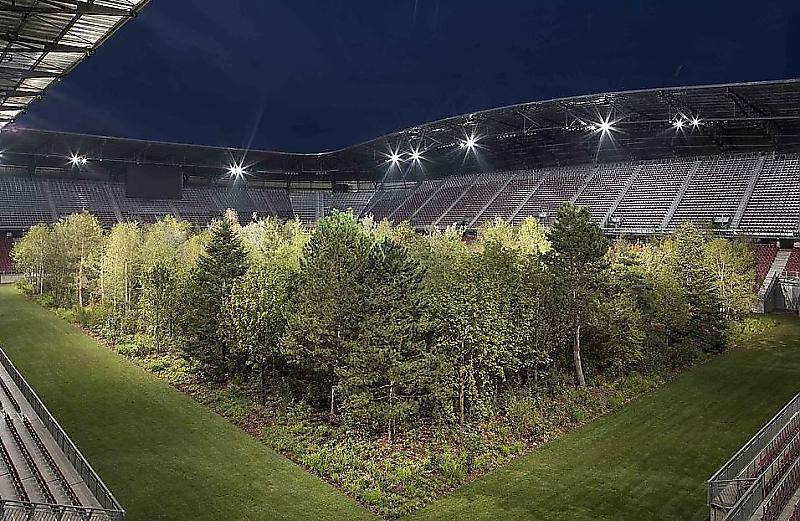 روزی میرسد که مردم برای تماشای درختان به استادیومها میآیند+فیلم