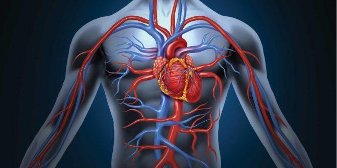 10 عاشورا//استرس و اضطراب دو قطب متفاوت/نقش گلاب بر زندگی فرد/عملکرد گردش خون چیست؟/رابطه سرما و سرماخوردگی