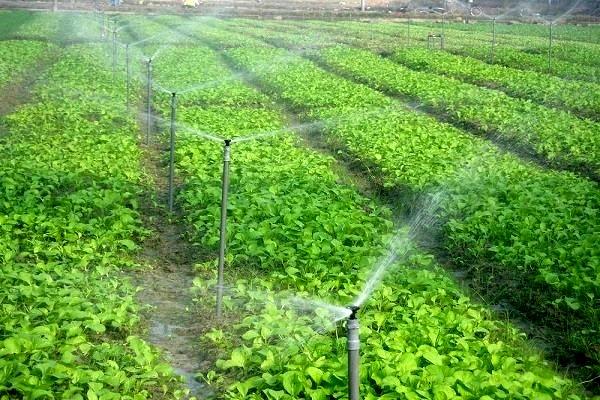 مشارکت بیش ازیک هزار و ۳۱۲ بهره بردار بخش کشاورزی استان در اجرای ۵ فازطرح استقرار کشاورزی پایدار
