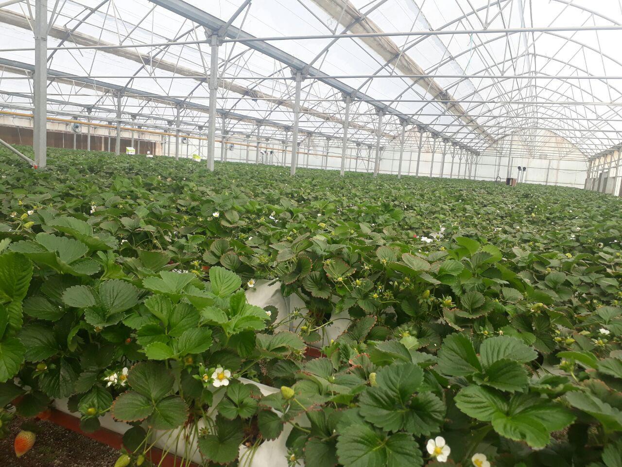 52 پروژه کشاورزی در استان زنجان به بهرهبرداری میرسد
