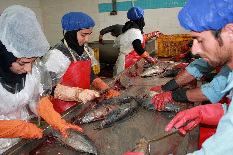 افتتاح بزرگترین کارخانه بستهبندی ماهی در غرب هرمزگان در هفته دولت