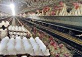 باشگاه خبرنگاران -ارز آوری ۲۱۸ هزار دلاری صادرات تخم مرغ به افغانستان