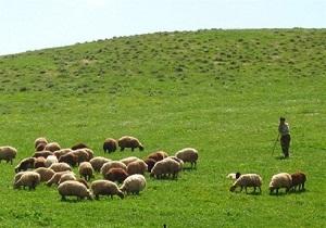 تولید ۷ هزار و ۵۰۰ تن علوفه در مراتع شهرستان نهاوند/افزایش ۷۰۰ تنی علوفه در مراتع نهاوند