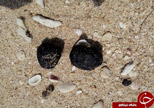 لکههای نفتی در خلیج فارس تهدیدی برای محیط زیست و گردشگری + تصاویر