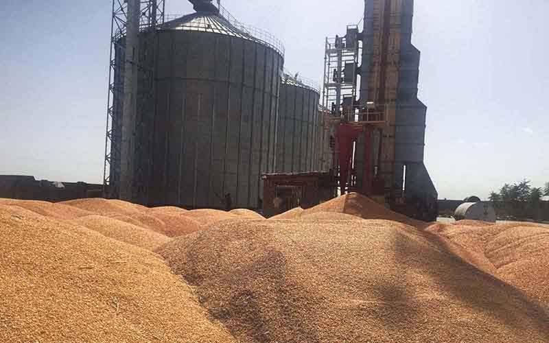 بخش دولتی و خصوصی ظرفیت نگهداری بیش از ۲۱ میلیون تن گندم را دارد