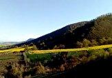 باشگاه خبرنگاران -گوشهای از طبیعت زیبای روستای مرزبن + فیلم