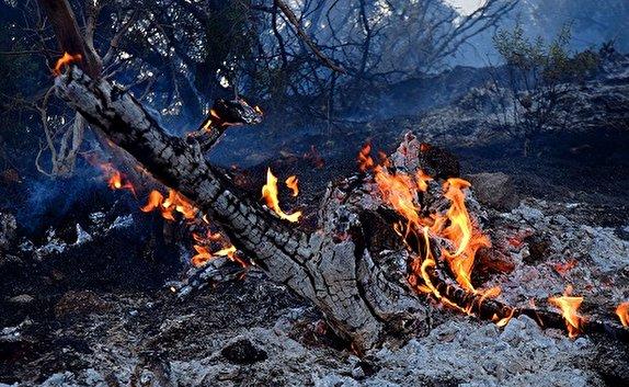 باشگاه خبرنگاران -آتش، بیش از ۴۰ اصله درخت بلوط در اندیکا را خاکستر کرد
