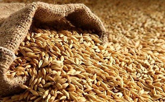 باشگاه خبرنگاران -خرید تضمینی ۱۲هزار تن گندم از کشاورزان