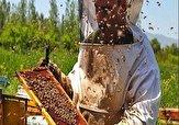 باشگاه خبرنگاران -توسعه صنعت زنبورداری در استان اردبیل