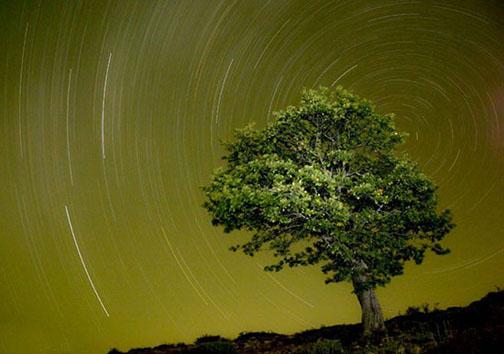 جنگل ابر؛ ملاقات با زمین و آسمان را اینجا تجربه کنید
