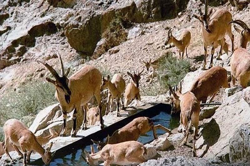 کارگاه آموزشی امداد و نجات حیات وحش در اراک