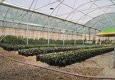 باشگاه خبرنگاران -وجود ۷۶ هکتار گلخانه در لرستان