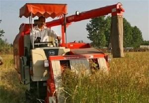 پایان برداشت برنج از شالیزارهای استان/ افزایش ۷ درصدی تولید شلتوک