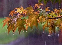 پیش بینی افزایش بارشها در پاییز