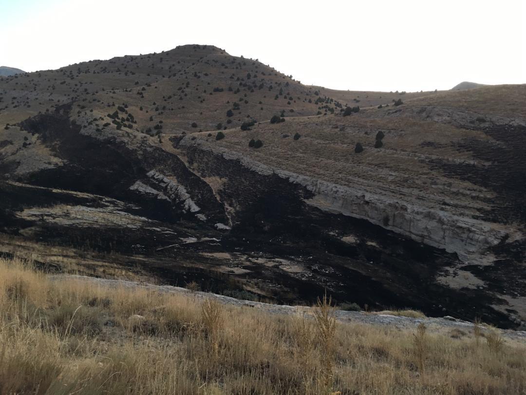 ۱۵ هکتار از اراضی تندوره در آتش سوخت/ سهل انگاری مسافران، علت آتشسوزی