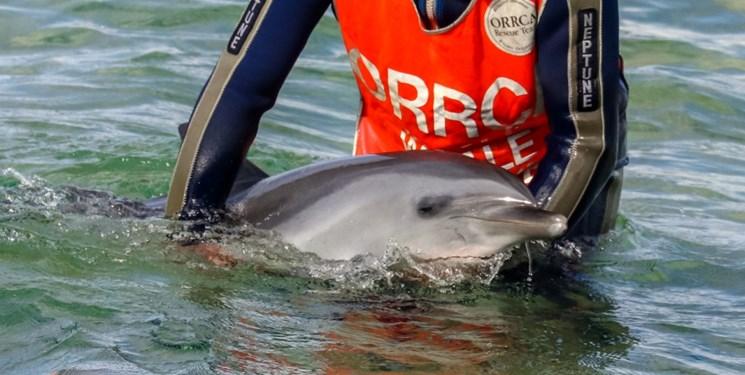 ویروسهای بدن دلفینها هم در برابر آنتی بیوتیکها مقاوم شدند