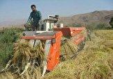 باشگاه خبرنگاران -آغاز برداشت برنج در استان قزوین