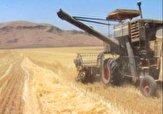 باشگاه خبرنگاران -۲۵ هزار تن گندم از اراضی کشاورزی سلسه برداشت شد