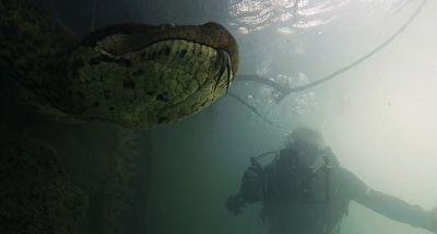 فیلم گرفتن غواصان از یک آناکوندای 7 متری از فاصله چند سانتیمتری
