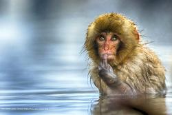 فینالیست های مسابقه عکاسی کمدی حیوانات