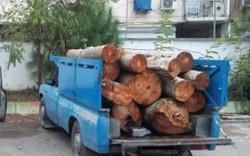 عمده قاچاق چوب در جنگلهای هیرکانی اتفاق میافتد/ مبارزه با قاچاق چوب از اهداف مهم سازمان است