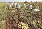 باشگاه خبرنگاران -اردبیل یک پنجم نیاز سیب زمینی کشور را تامین میکند