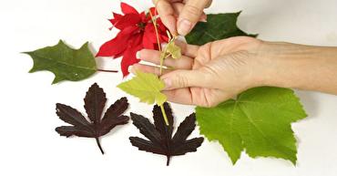 باشگاه خبرنگاران - ۶ روش برای نگهداری از برگ های پاییزی