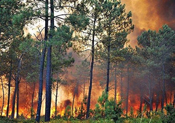 باشگاه خبرنگاران -شناسایی عاملان آتش سوزی جنگلهای ارسباران/ ۳ نفر بازداشت شدند