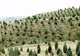 باشگاه خبرنگاران -توسعه بیش از ۲۰۰ هکتار جنگل در شهرستان نهاوند