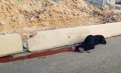 #شهیده_فلسطین/ ای خفته در خون سرخ آسوده بخواب که روز انتقام نزدیک است + تصاویر