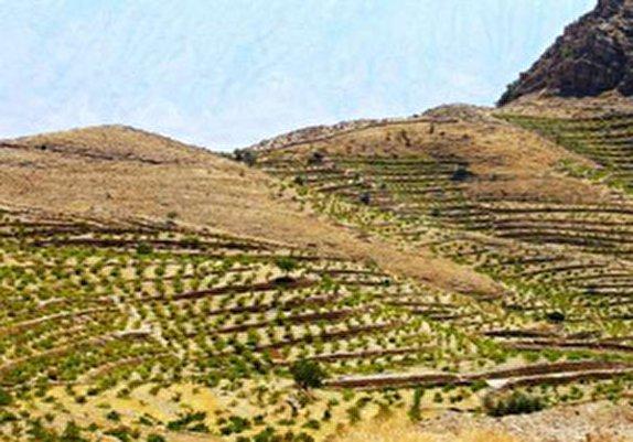 باشگاه خبرنگاران -رفع تصرف ۵۰ هکتار از اراضی ملی شهرستان الیگودرز