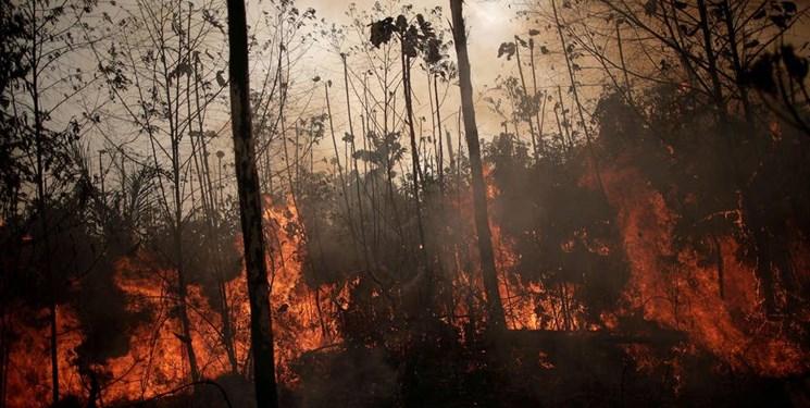 زمین ۶۴ میلیون هکتار جنگل «از دست داده است
