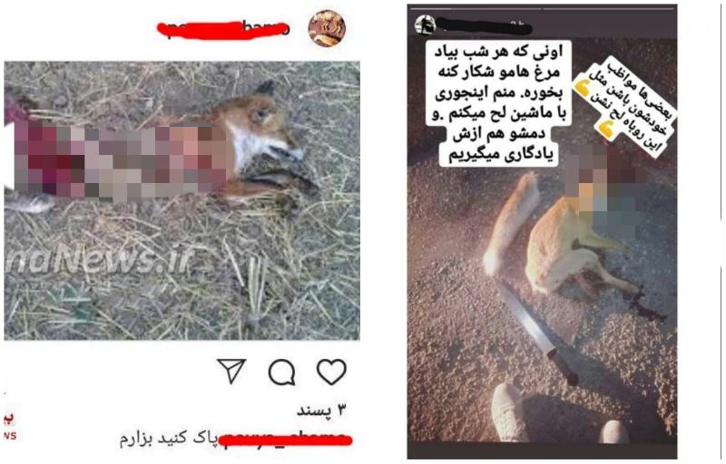 عامل انتشار فیلم سلاخی حیوانات وحشی دستگیر شد + عکس