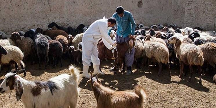 اجرای واکسیناسیون رایگان دامها و سمپاشی اماکن دامی در روداب سبزوار
