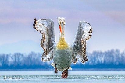 مسابقه عکاسی پرندگان سال  ۲۰۱۹