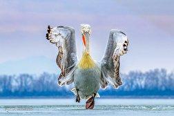 باشگاه خبرنگاران - مسابقه عکاسی پرندگان سال  ۲۰۱۹
