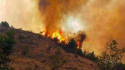 دستور قضایی برای بررسی حادثه آتش سوزی جنگل ارسباران صادر شد