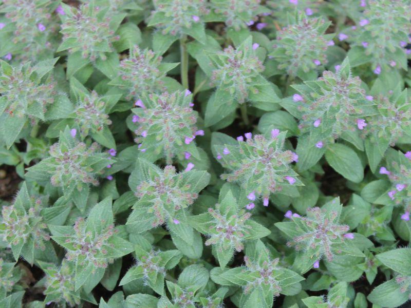 پرورش ۳۲ گیاه دارویی در جهرم
