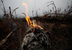 مکرون: سران گروه هفت برای کمک به کشورهای حوضه آمازون آمادهاند