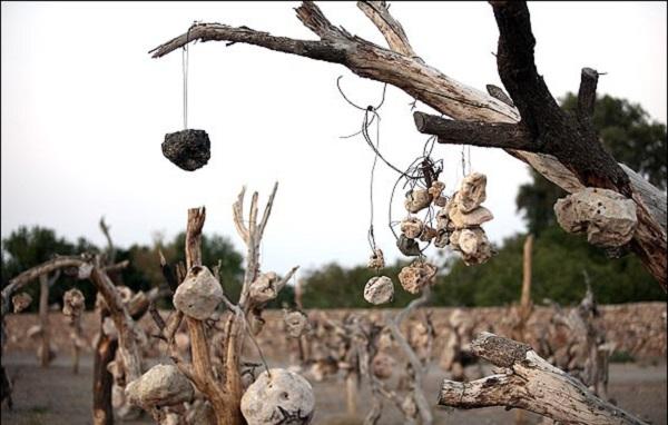 باغی مرموز در کرمان که میوه درختانش سنگ است + تصاویر