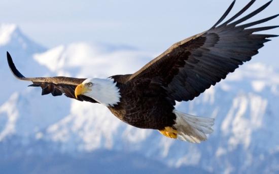 خواب عقاب چه تعبیری دارد؟