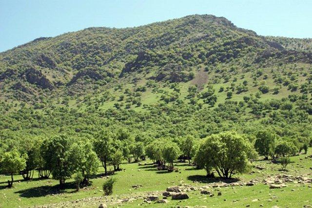 آغاز فاز نخست کاشت ۴۰۰ هکتار جنگل در ملایر