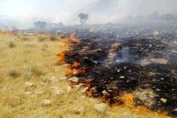 مهار آتش سوزی مراتع در طارم